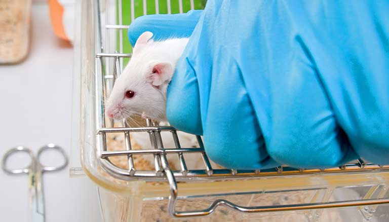 Mouse model of amyotrophic lateral sclerosis (ALS)